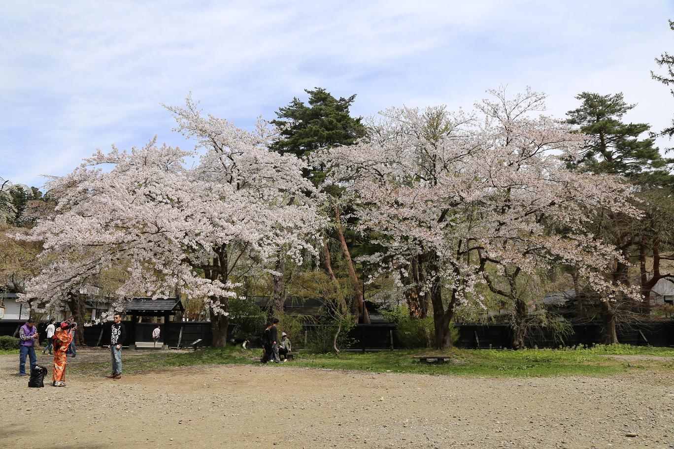角舘 桜6