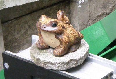 親子カエル