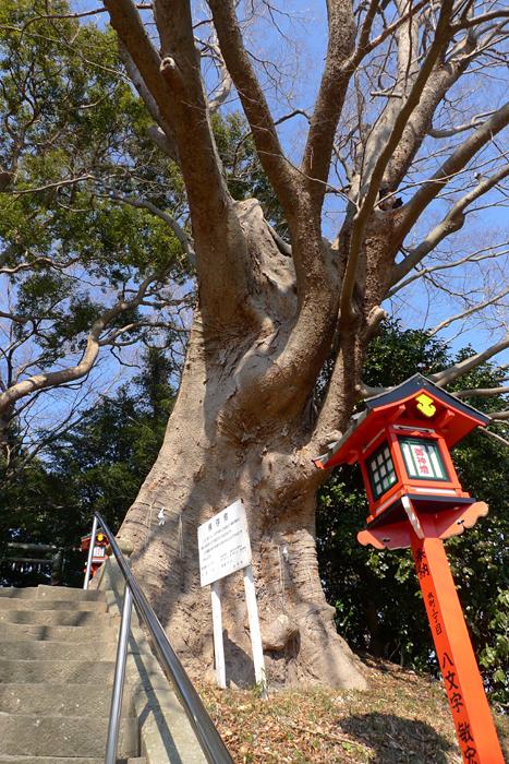 常陸国の神社  吉田神社  5