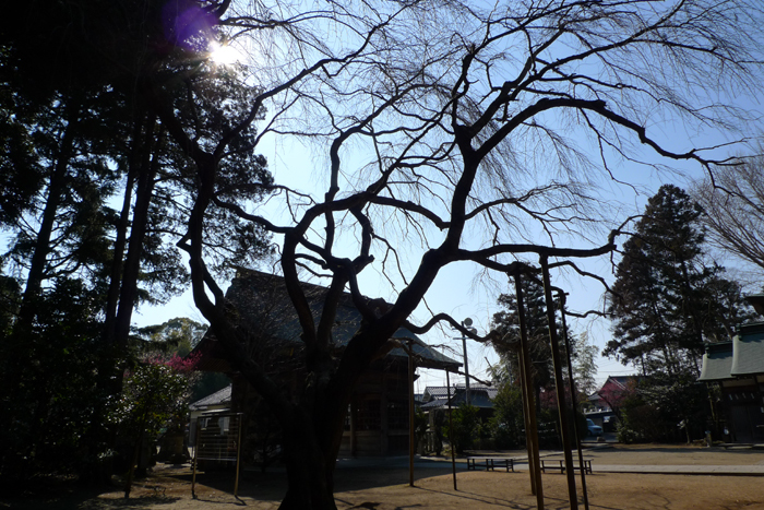 常陸国の神社  吉田神社  26
