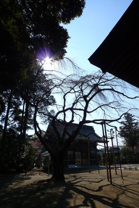 常陸国の神社  吉田神社  27