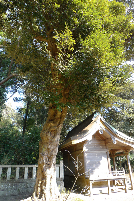 常陸国の神社  大洗磯前神社 36