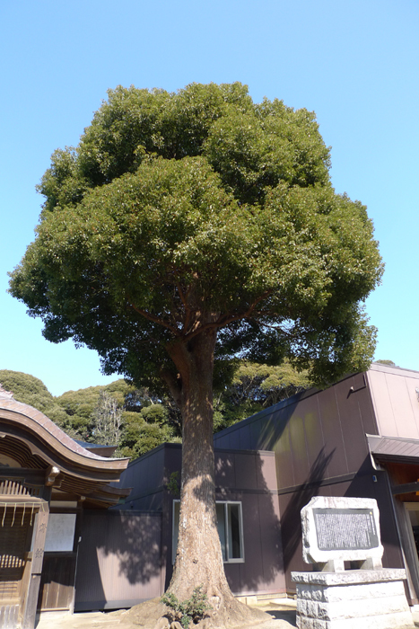 常陸国の神社  酒列磯前神社  15