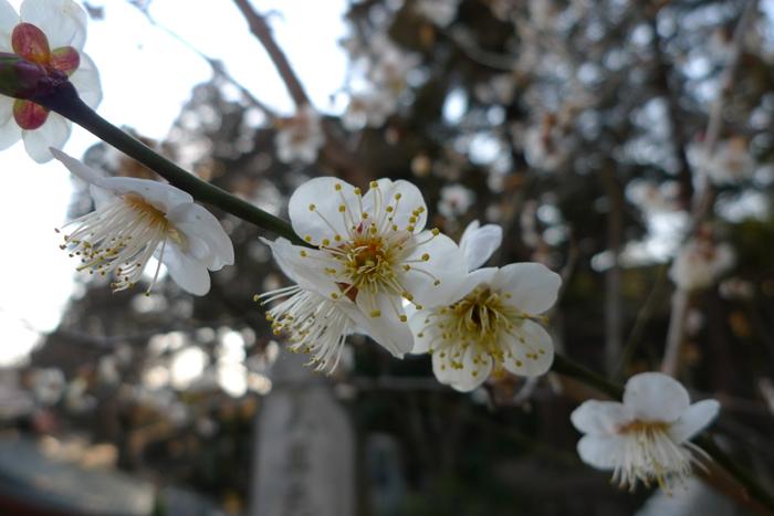 常陸国の神社  筑波山神社  10