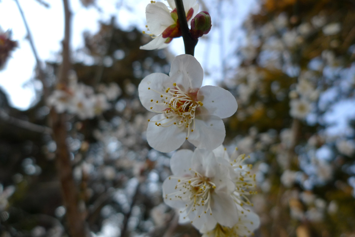 常陸国の神社  筑波山神社  11