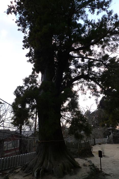 常陸国の神社  筑波山神社  36