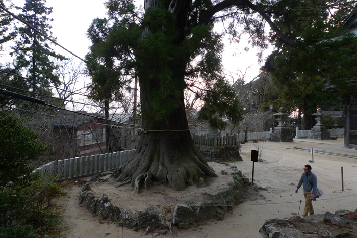 常陸国の神社  筑波山神社  37