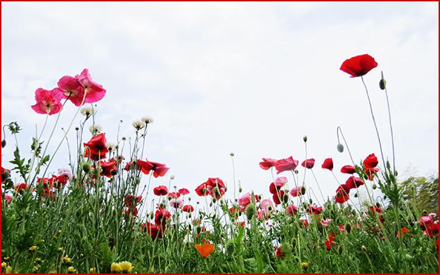 XeSrP_du70RPNnm1494116429_1494116467.jpg