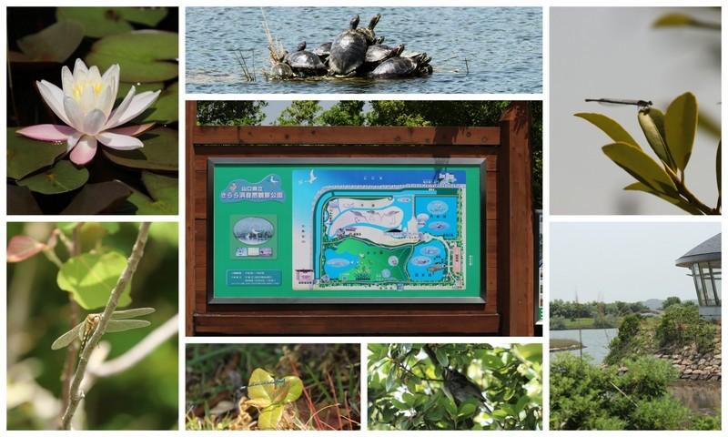 170507自然観察公園