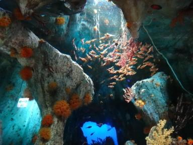 サンシャイン水族館、その2
