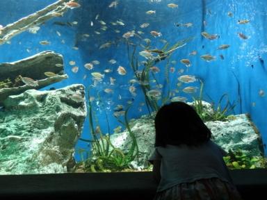 サンシャイン水族館、その1