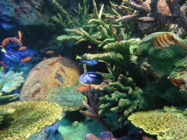 サンシャイン水族館、その5