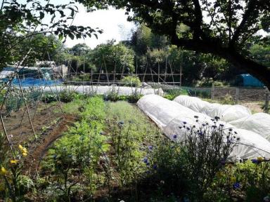 園の畑の一部