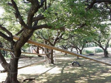 梅の木に竹を組み合わせた手作り遊具