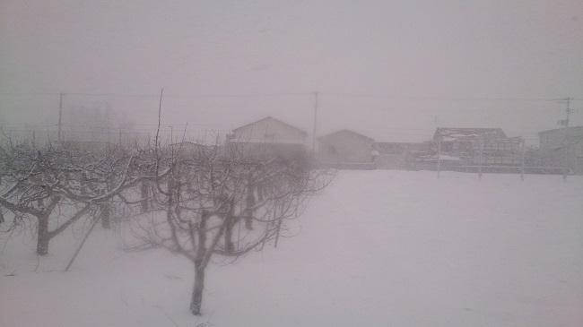 弘前付近の雪