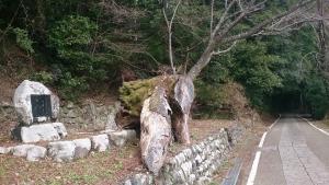 熊野古道 中辺路2