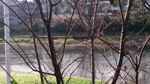 藻の花 部屋 ウッドデッキからの眺め