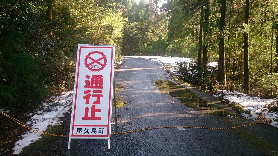 紀元杉への林道