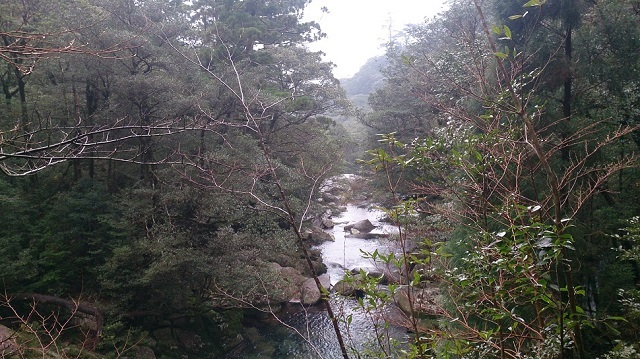 白谷雲水峡18