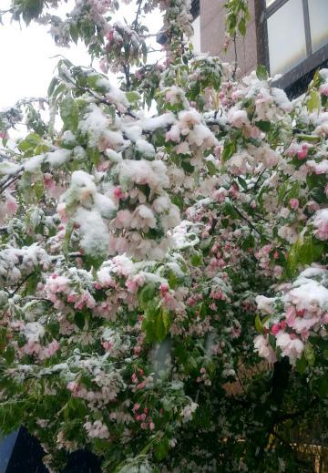 雪降る四月2