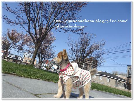 001-ゆめ散歩170502-1511