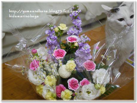 001-ココと花170613-0607