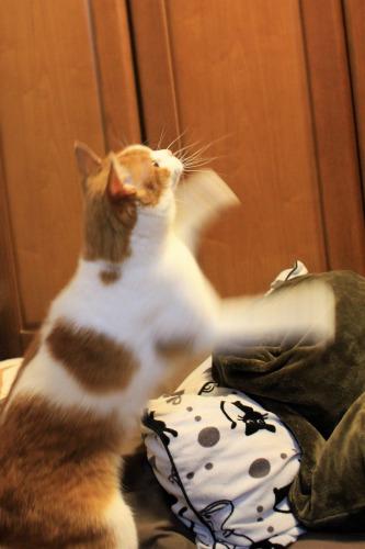 ブログNo.1008(おっさん猫のジャンプ!!)6