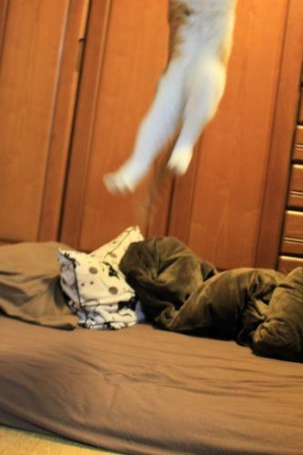 ブログNo.1008(おっさん猫のジャンプ!!)9