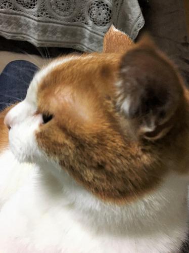 ブログNo.945(やせ我慢?)5