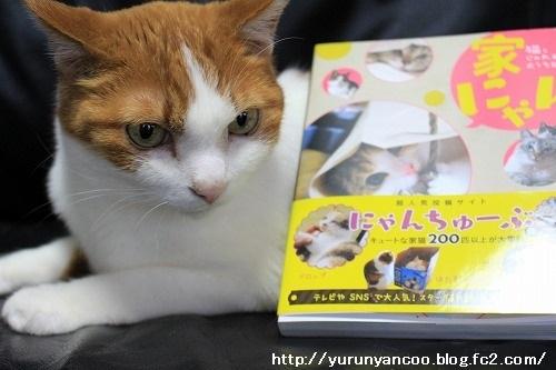 ブログNo.949(風来堂書籍「家にゃん」に掲載されました♪)5