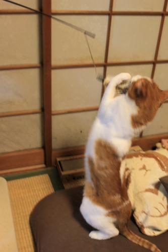 ブログNo.1008(おっさん猫のジャンプ!!)1