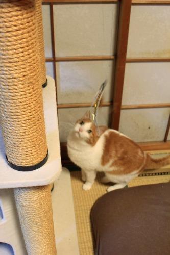 ブログNo.1008(おっさん猫のジャンプ!!)3