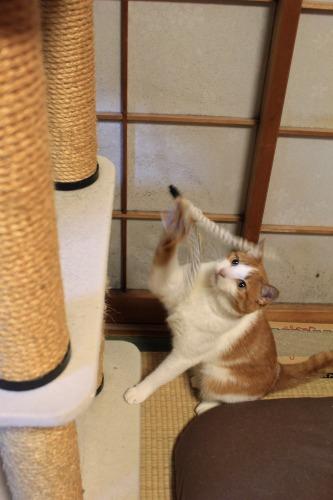 ブログNo.1008(おっさん猫のジャンプ!!)4