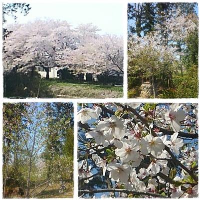 A280428桜