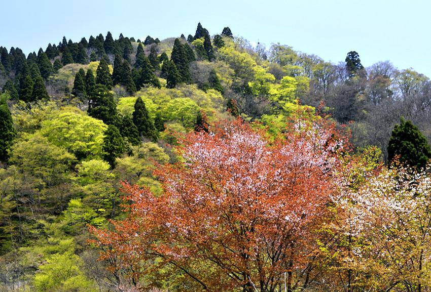 北山(春)01