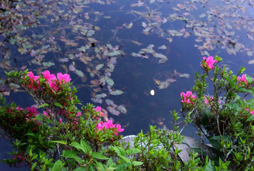 モネの池01