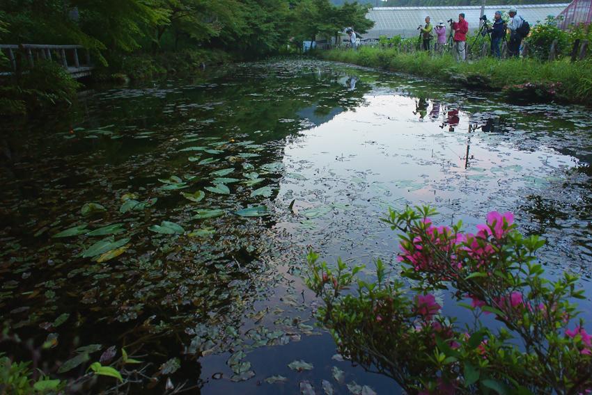 モネの池04