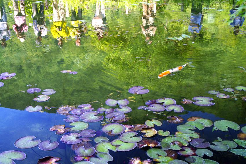 モネの池09