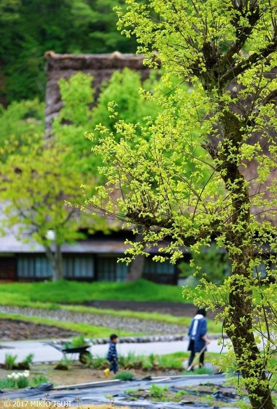 絶景探しの旅 - 0226 合掌造り集落 母の思い出 (岐阜県 白川村)