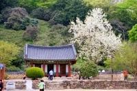 全羅北道 禅雲寺