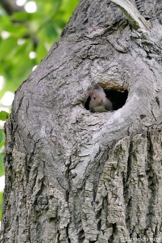 絶景探しの旅 - 0276 北の森の小さな住人 (滝川公園/北海道 滝川市)
