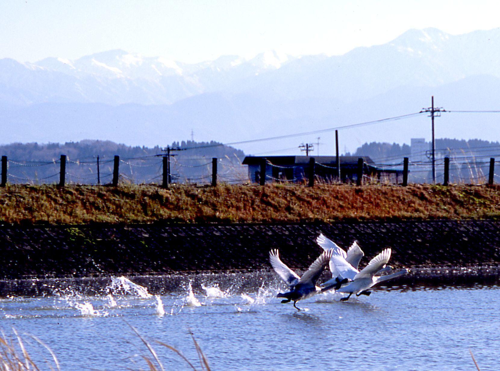 20041214田尻池3a