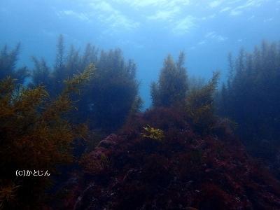 514 海の森