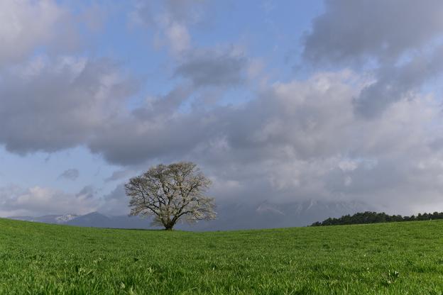 岩手山と一本桜