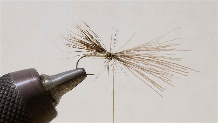 caddis-adult-0001-007.jpg