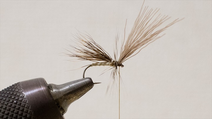 caddis-adult-0001-008.jpg