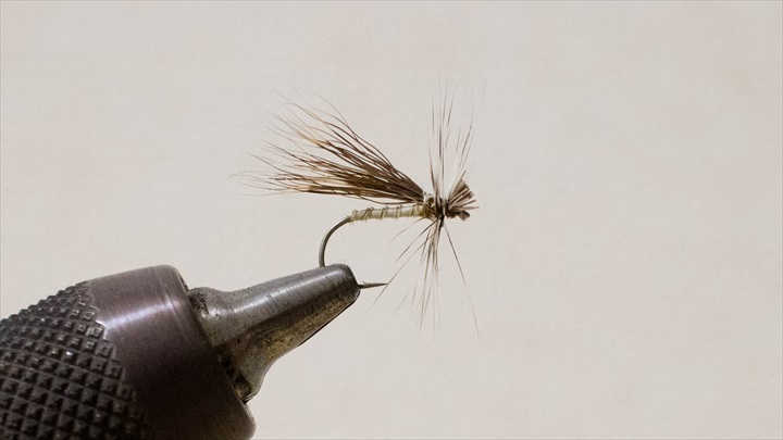 caddis-adult-0001-009.jpg