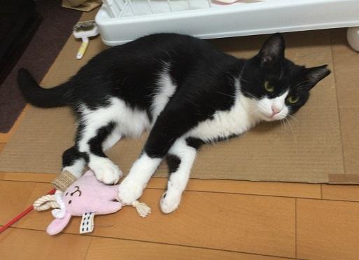 迷い猫2ミルク
