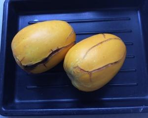 真桑瓜収穫