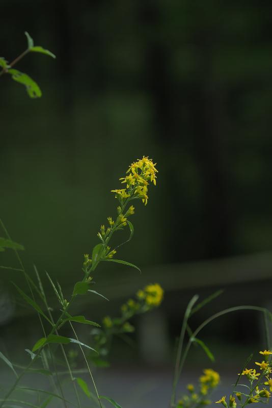 akinokirinsou004.jpg